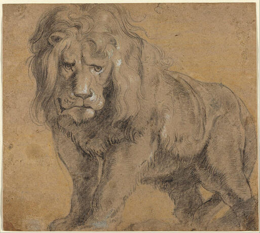 Drawing of a Lion by Peter Paul Rubens