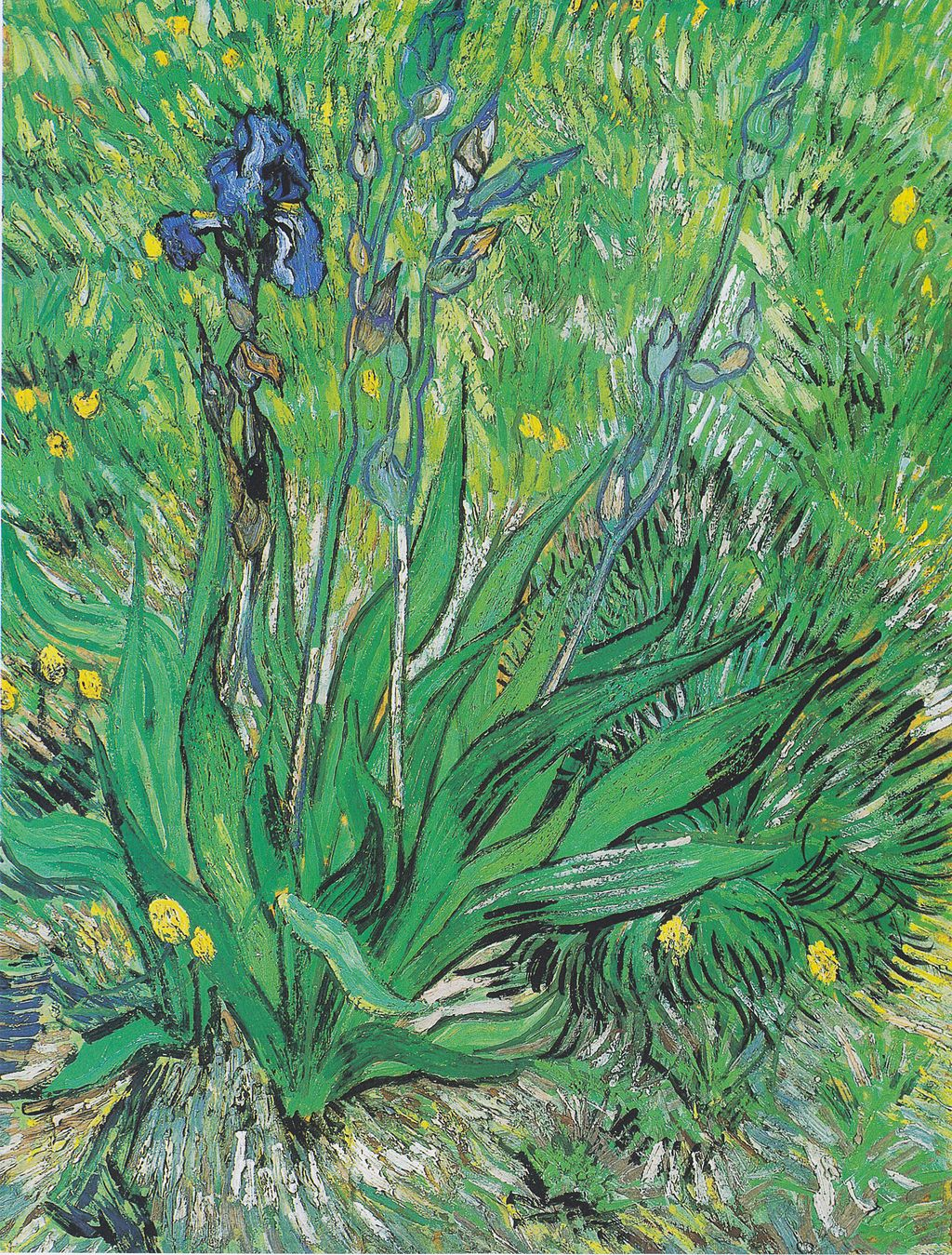 A discussion of irises by van gogh in the getty museum iris by van gogh reviewsmspy
